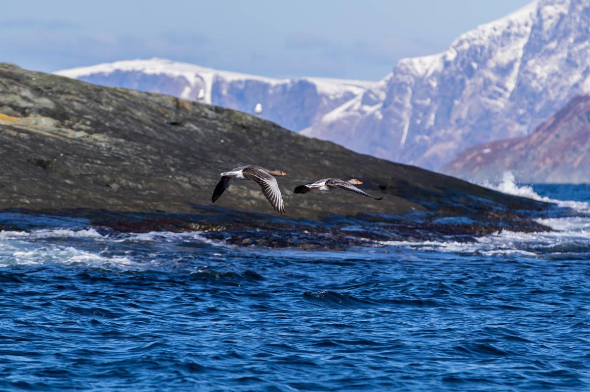 Birdsafari Vannoy, vannoysportog havfiske