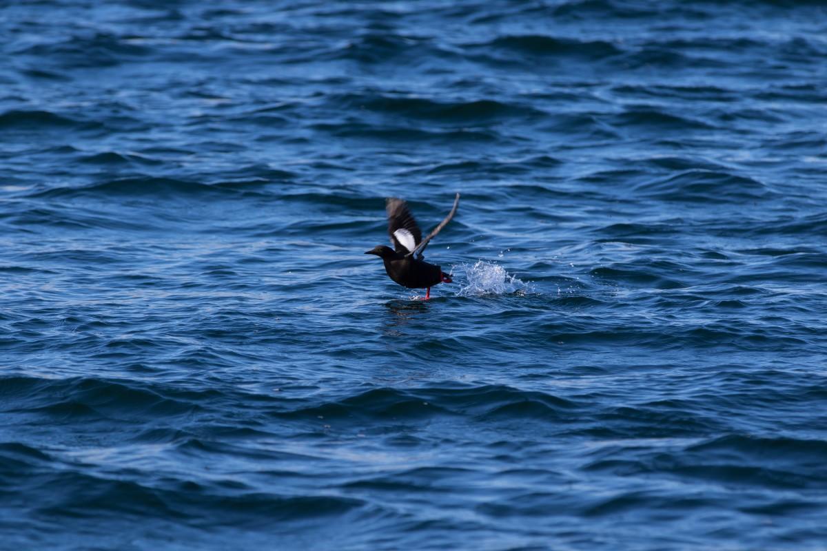Birdsafari Vannoysport, Nord Fugløy