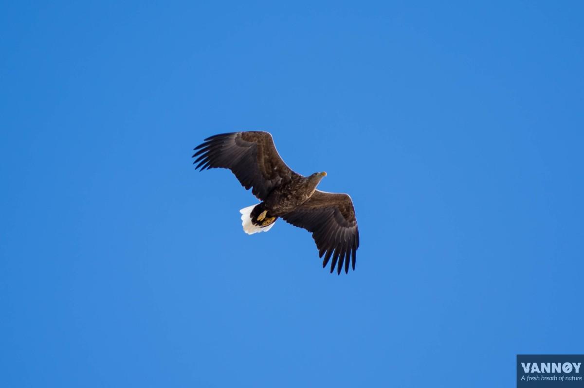 Bird safari, VannoysportogHavfiske, Vannoy, Nord Fugløy